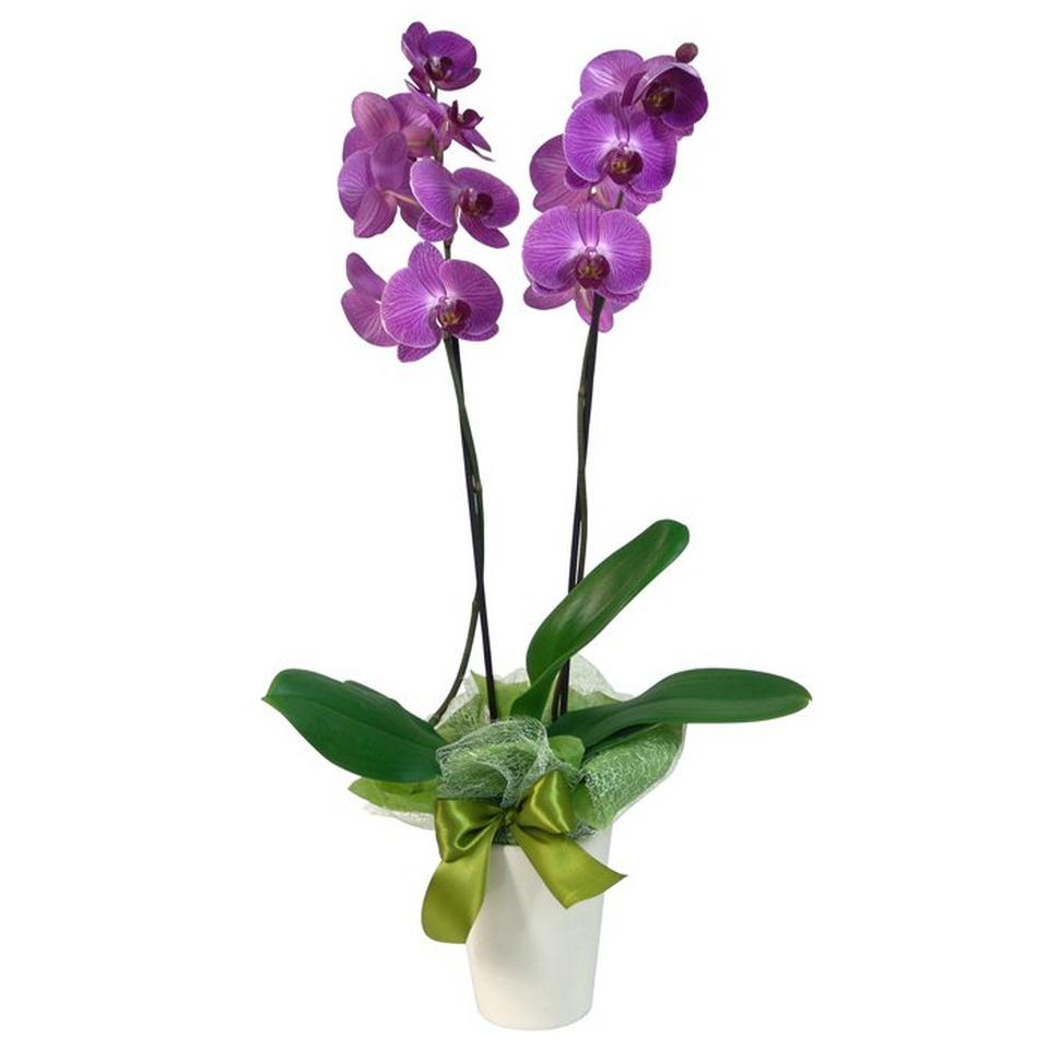 Image 1 of 1 of Orchid in a pot