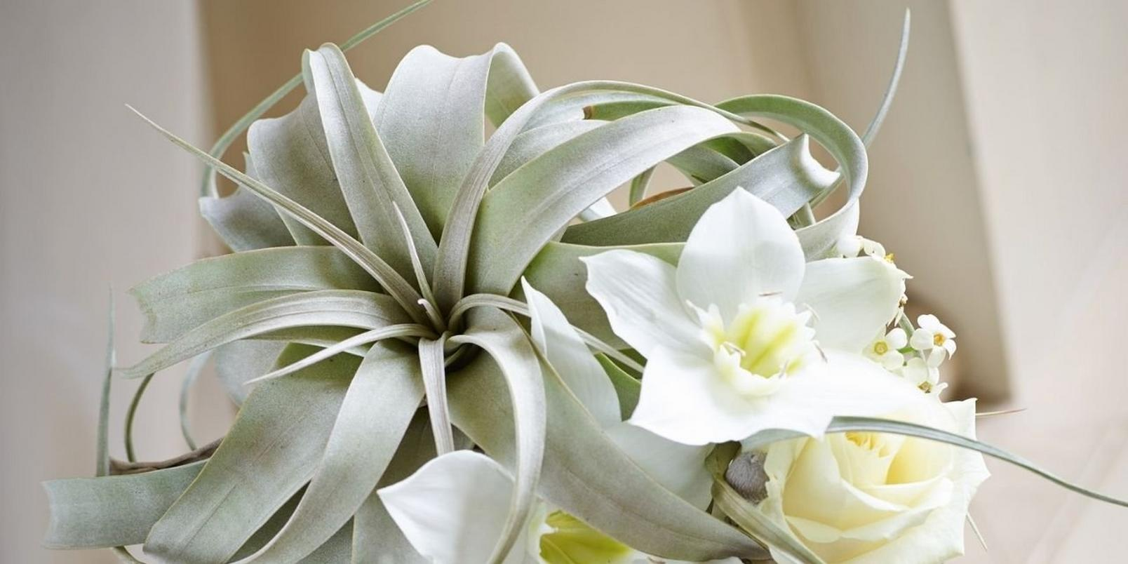 Add-a-subheading-24-lily-succulent