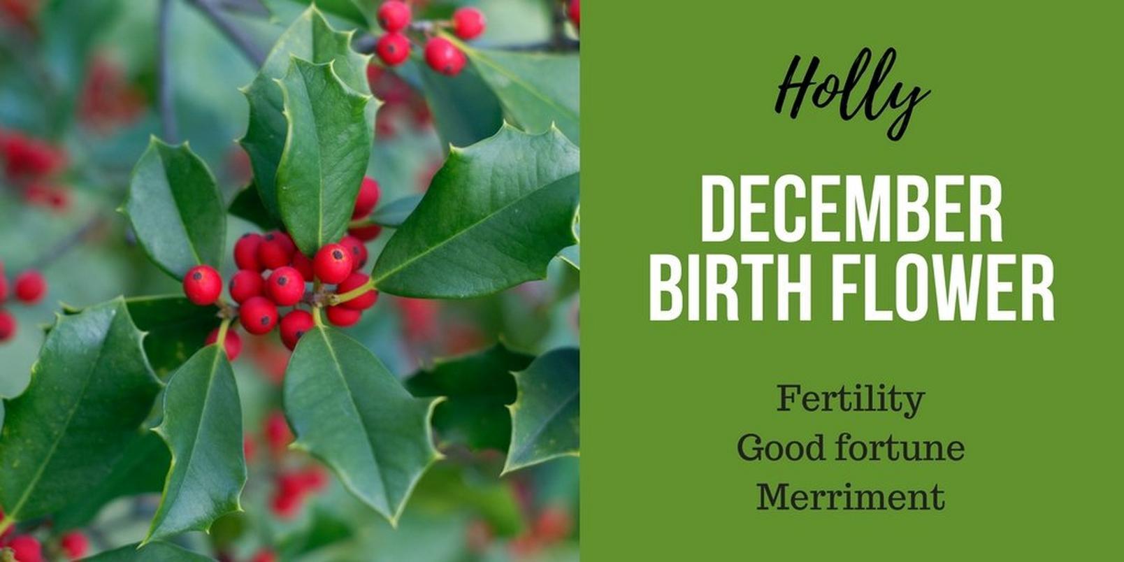 December-birth-flowerff