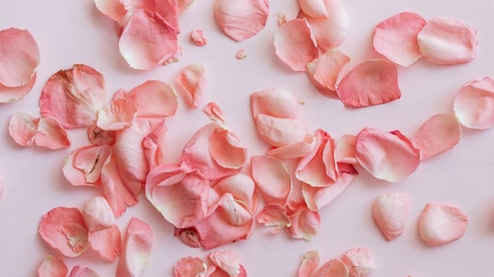 Dried Flowers - Dried petals of roses on pink background
