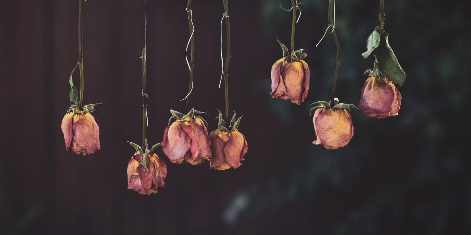 Dried-Flowers-Yellow-and-Red-Petaled-Flower