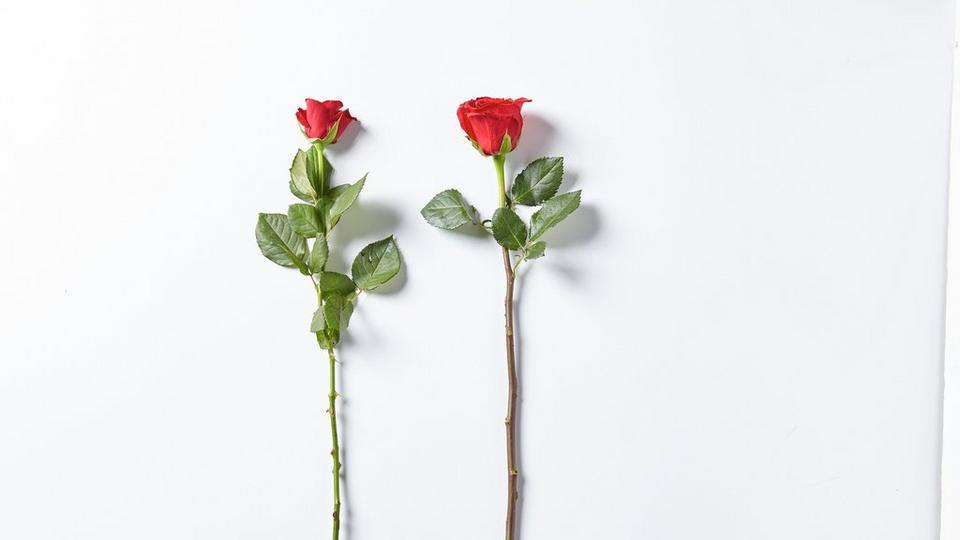 Interflora251119-FF_Rose_Length_Scale