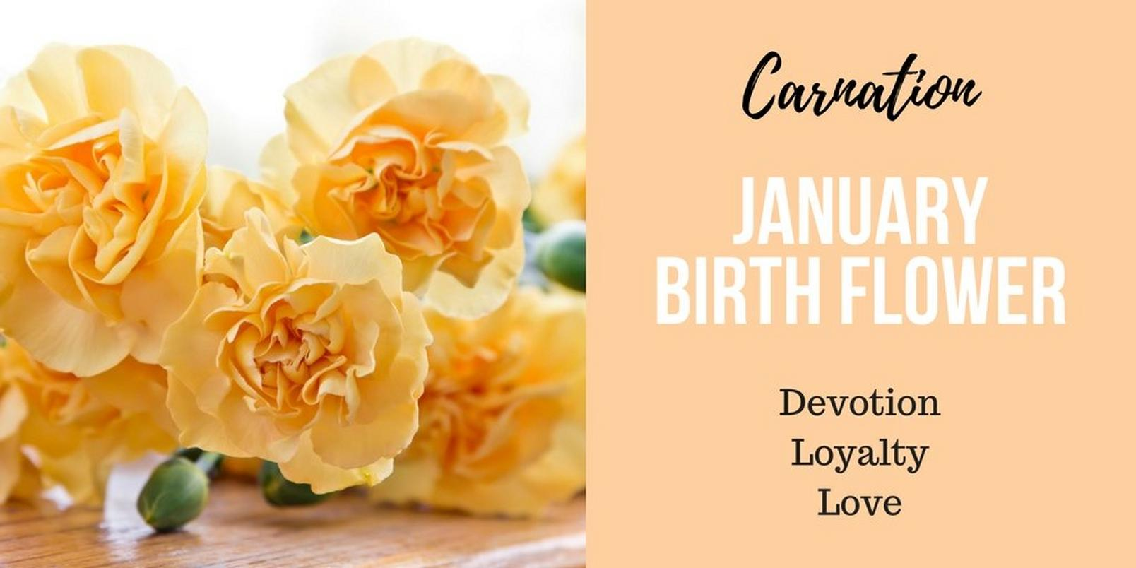 January-birth-flower-2