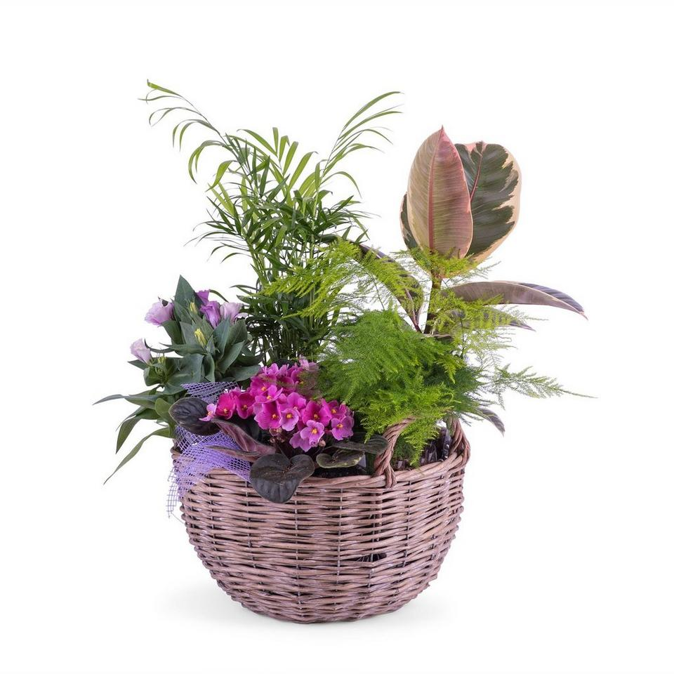 Image 1 of 1 of Centrepiece of Plants