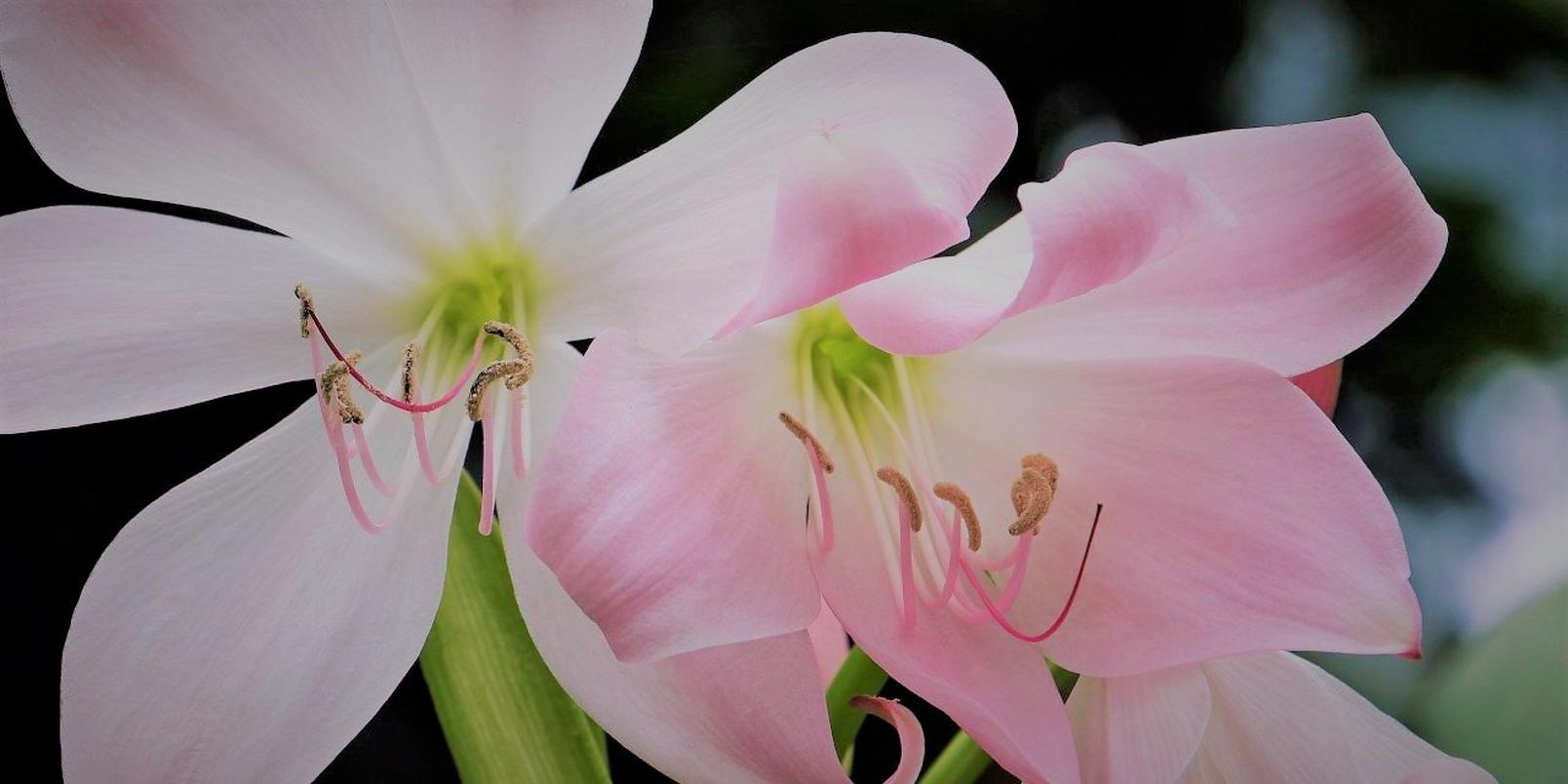 Pink-flowers-6