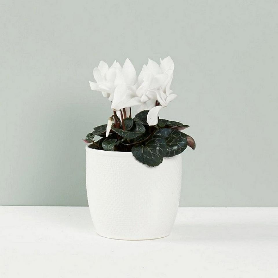 Image 1 of 1 of Seasonal Flowering Plant