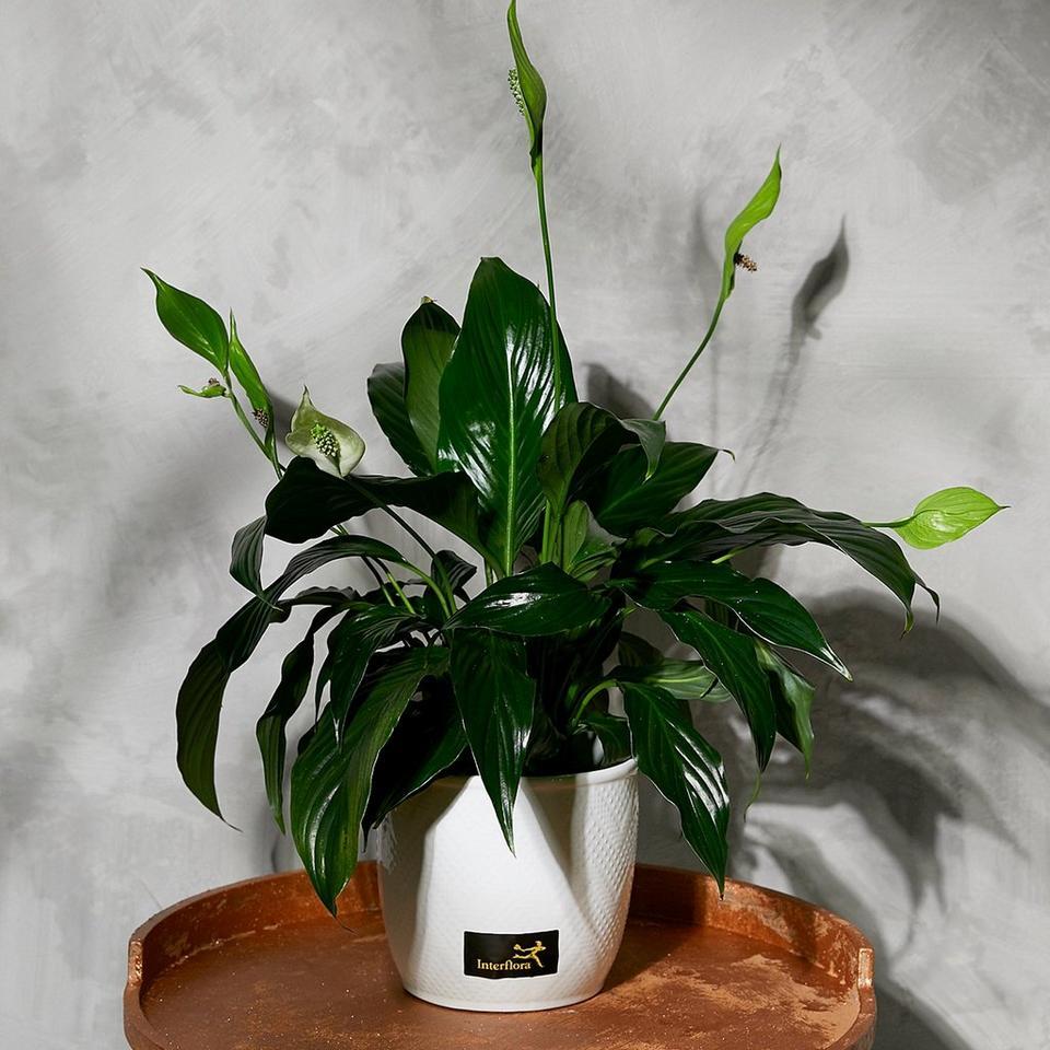 Image 1 of 1 of Seasonal Plants