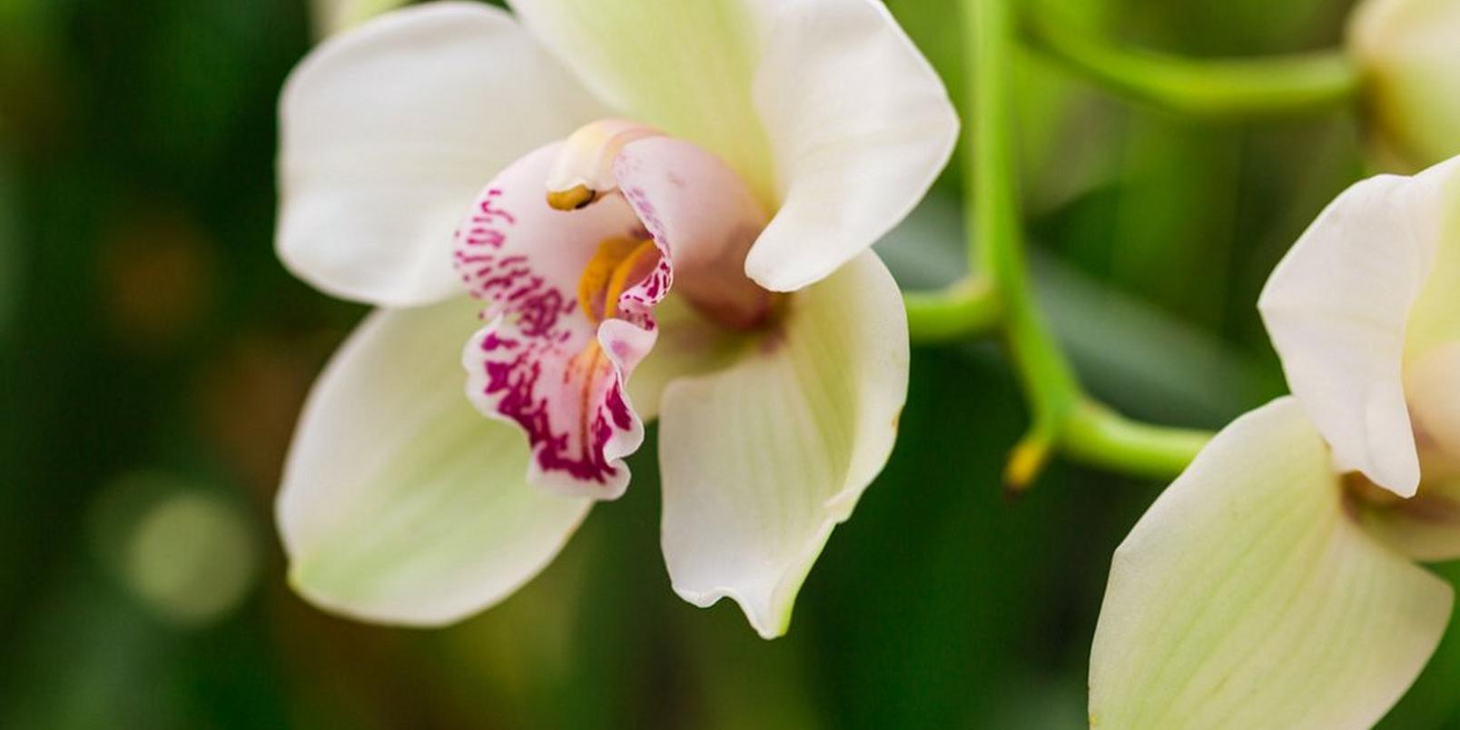 Untitled-design-1(Orchid)