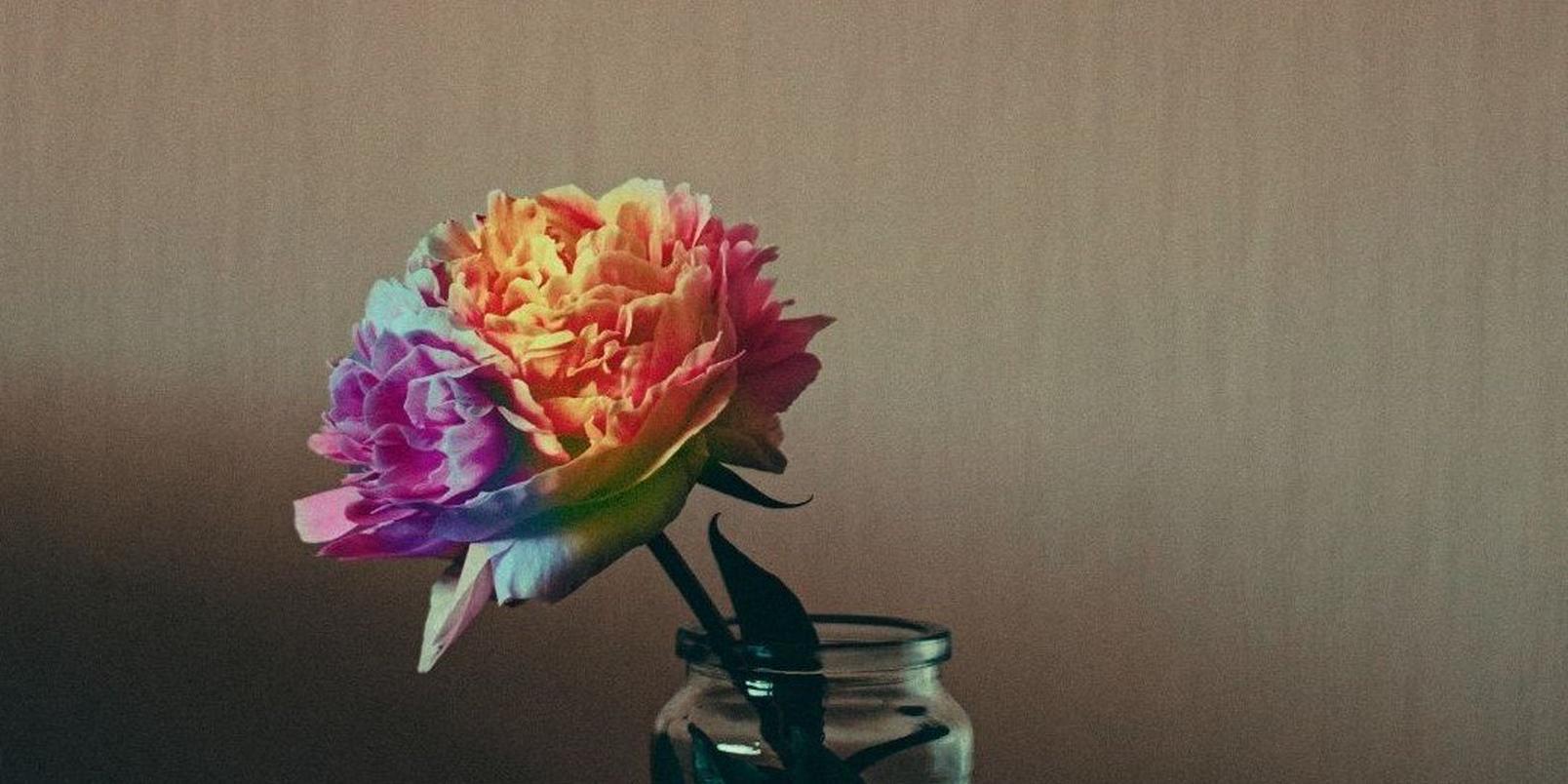 Untitled-design-42-muted-rainbow-carnation