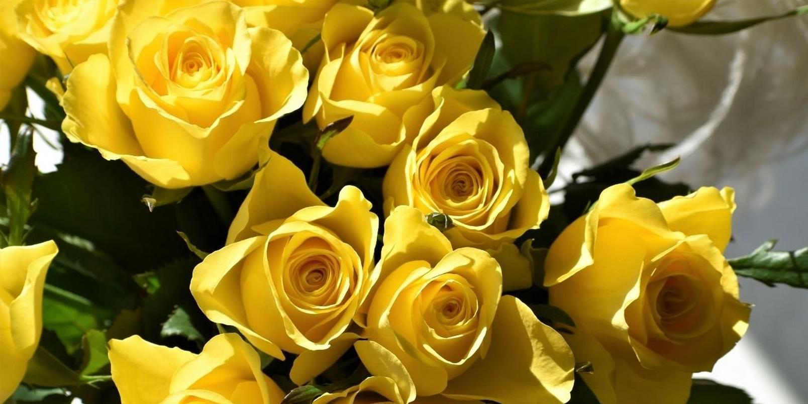Untitled-design-92-yellow-rose