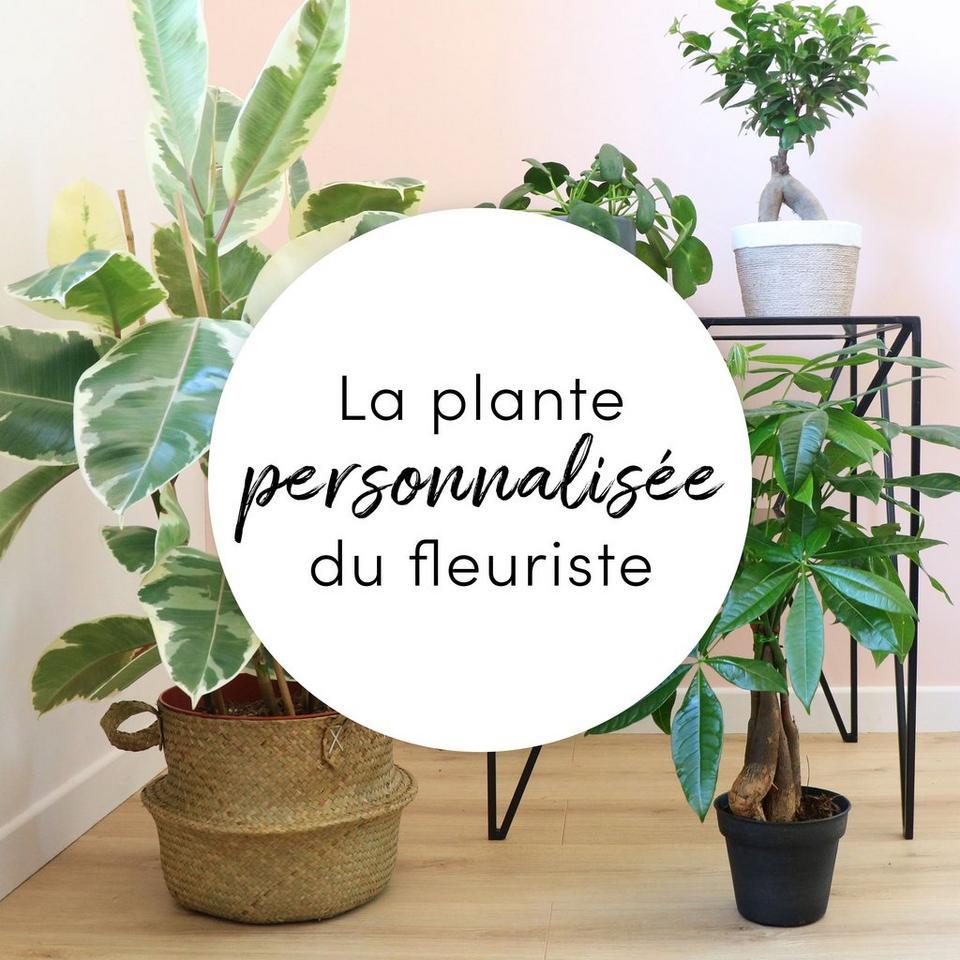 Image 1 of 1 of Plante du fleuriste