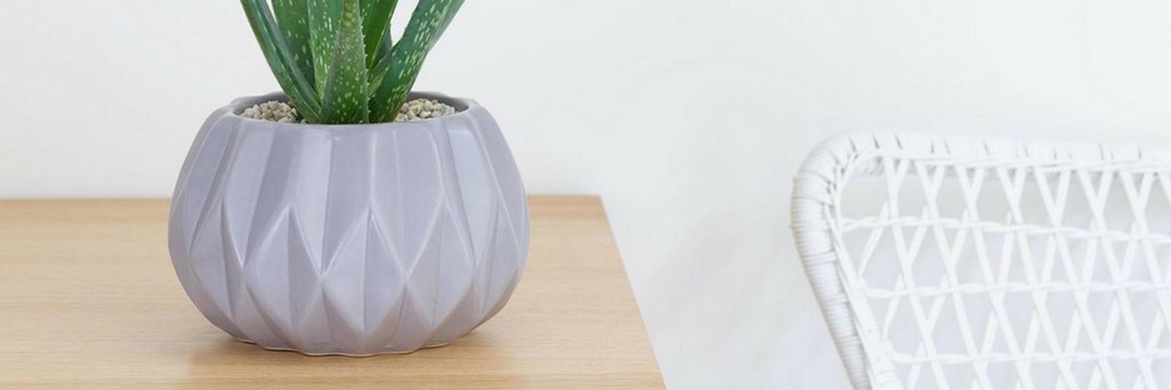 aloe-vera-succulent-plant