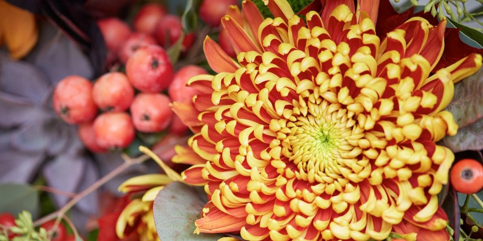 flower-types-autumn-flowers-1