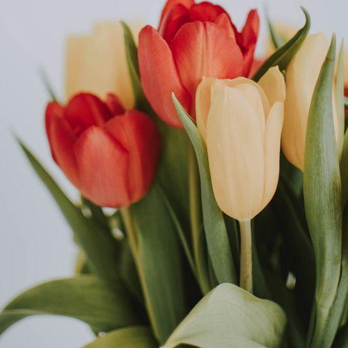 goblet-tulip