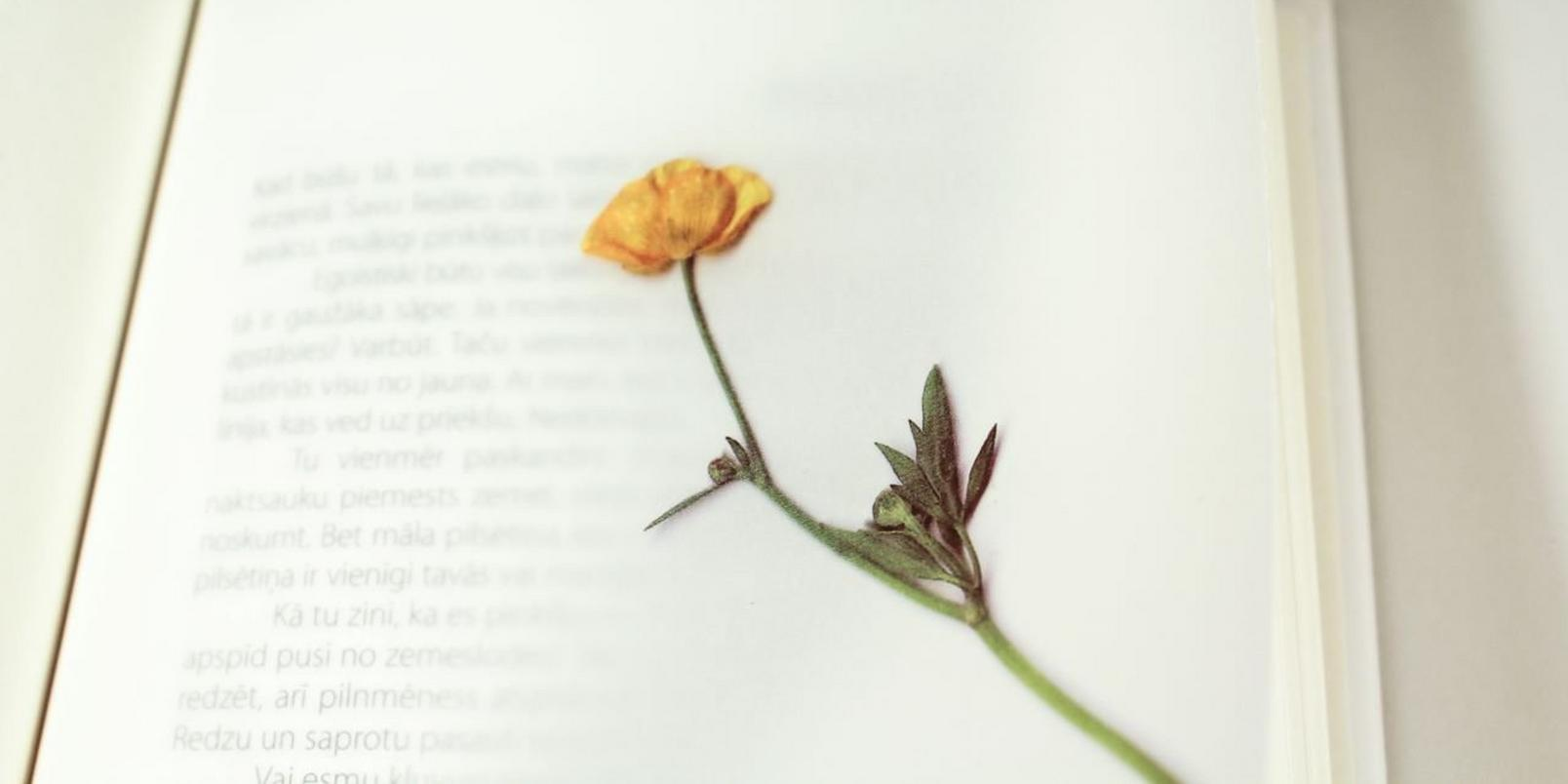 how-to-press-flower-3