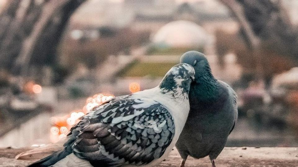love-birds_10