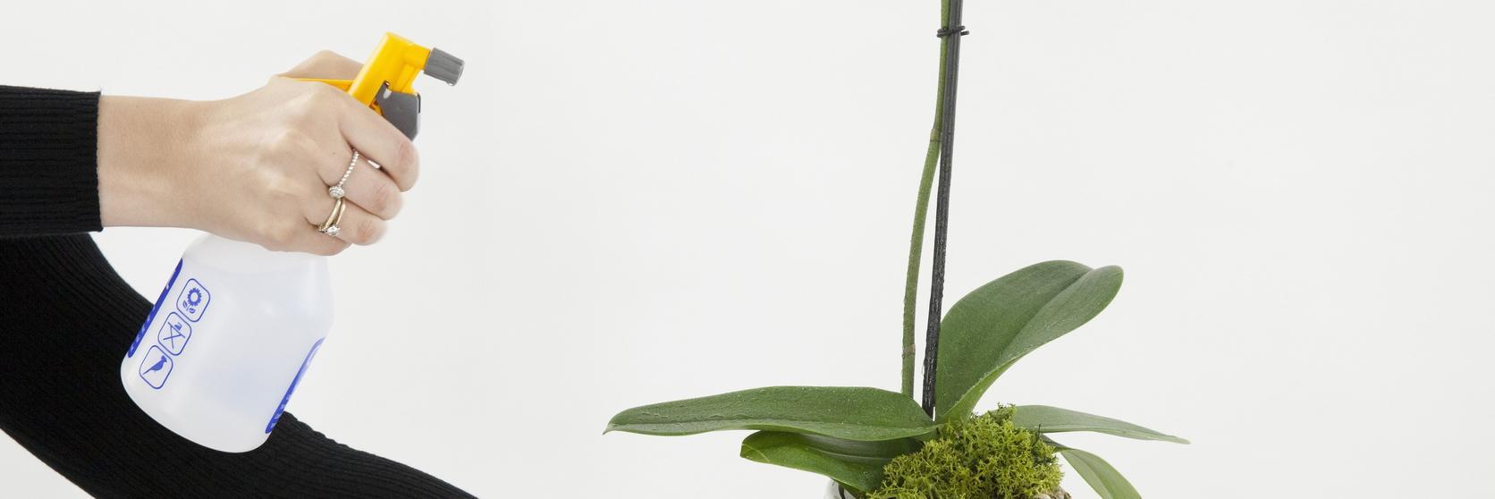 orchidCareMist