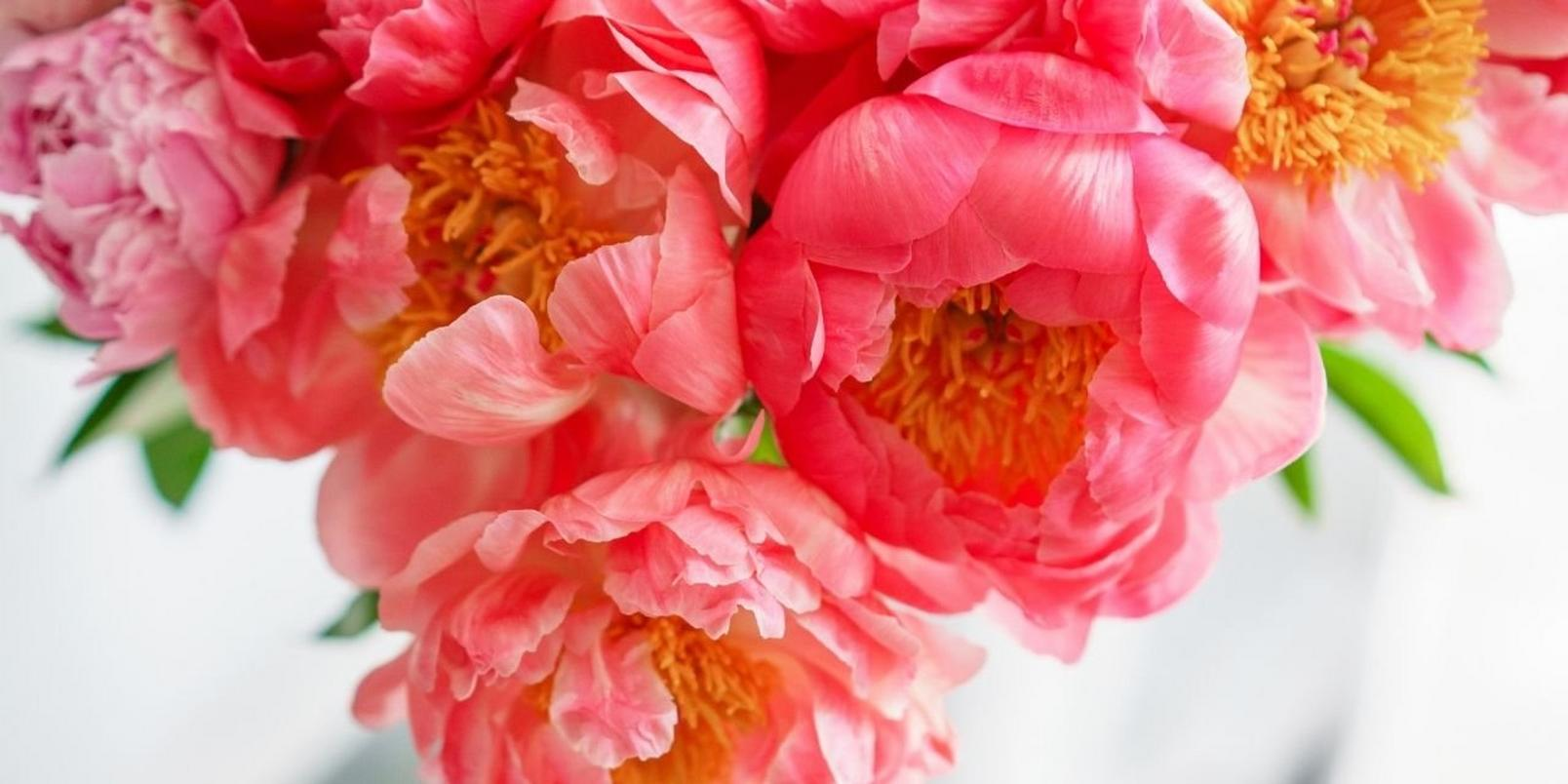 peonies-facts-that-may-surprise-you-6
