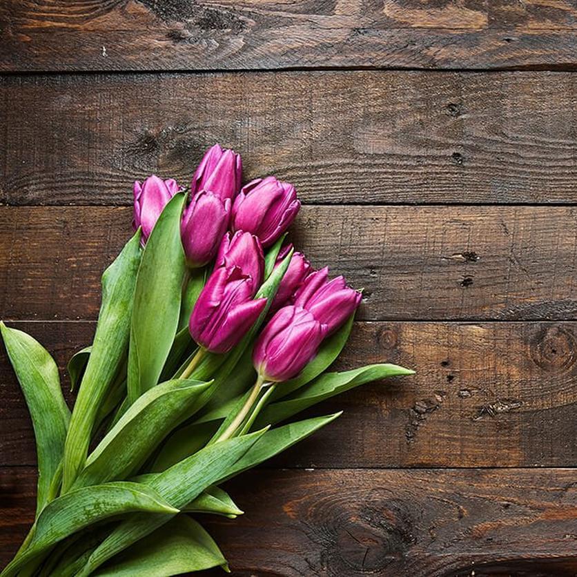 purple-tulips-ultimate-flower