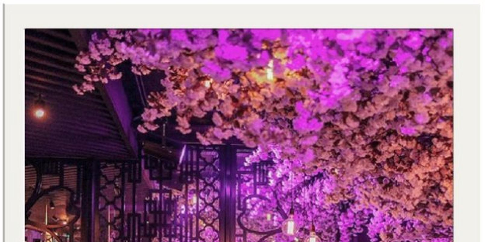 top-8-instagrammable-places-uk-love-flowers 3
